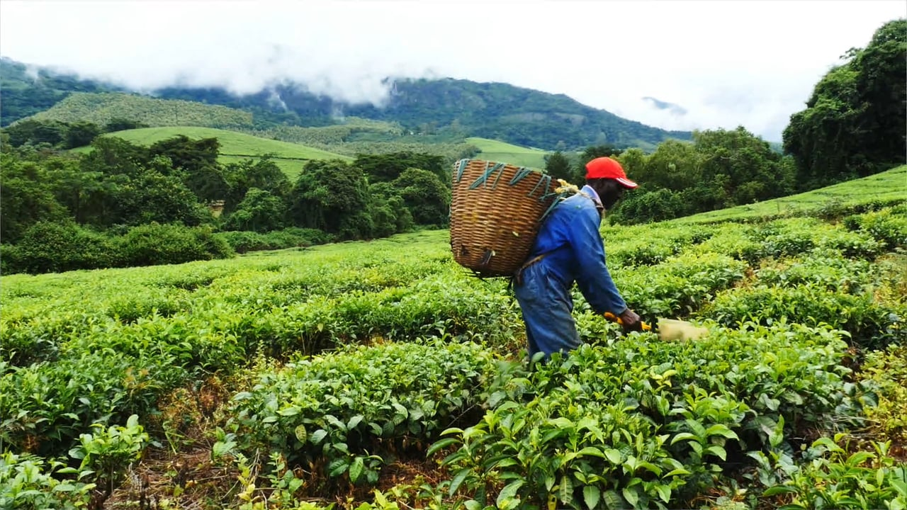 Inclusive Business in Zimbabwe: partnerships for Export